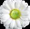 greenpea - profile picture